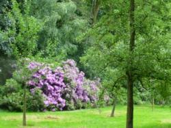 Gaasbeek 052